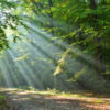 The Miracle in the Madness: Pathway to healing from destructive relationships